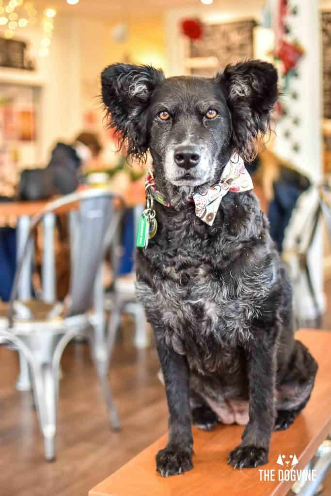 Dog-Friendly Cafe - Paws for Coffee Sheen 16