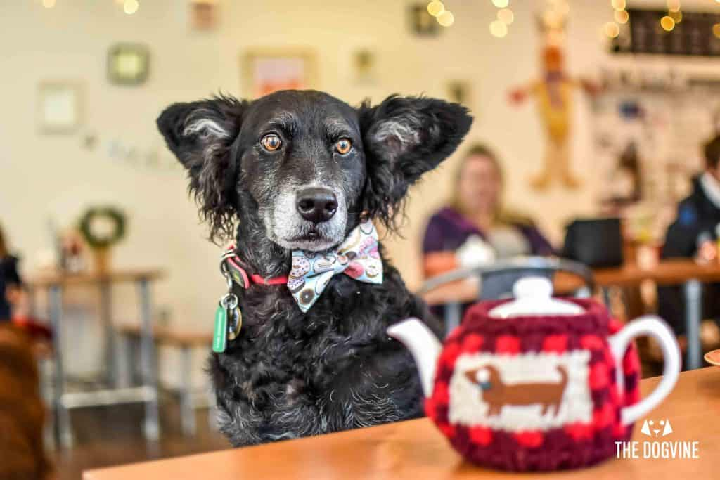 Dog-Friendly Cafe - Paws for Coffee Sheen 19