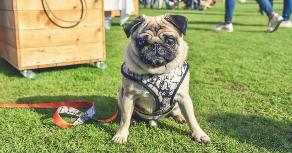 London Dog Events 2018 | 17 Things To Do In London With A Dog