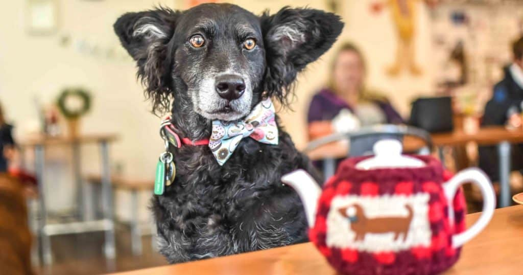 Refuel With Your Pooch At The Dog-Friendly Cafe Paws for Coffee