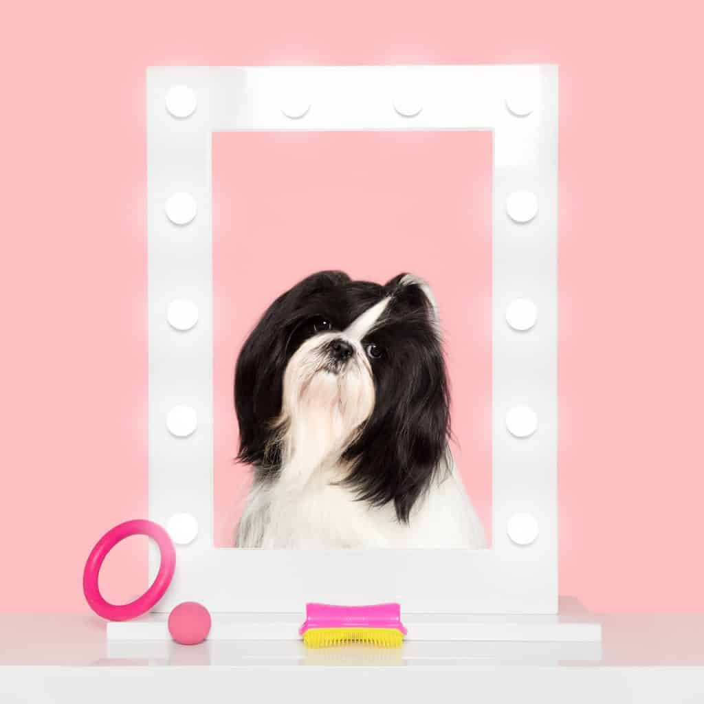 Introducing The Pet Teezer, The New Tangle Teezer For Dogs 8