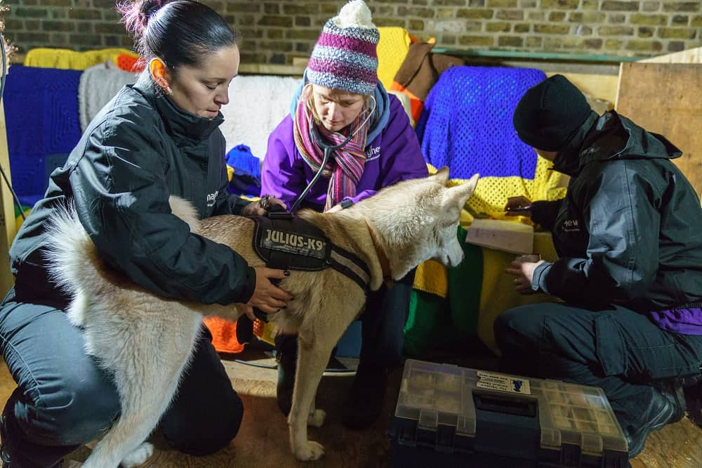 Mayhew Helps Dogs Of The Homeless At Crisis At Christmas Animal Welfare Officer, Tania, Mayhew Vet, Emma, and Animal Welfare Officer, AJ, with Sonic