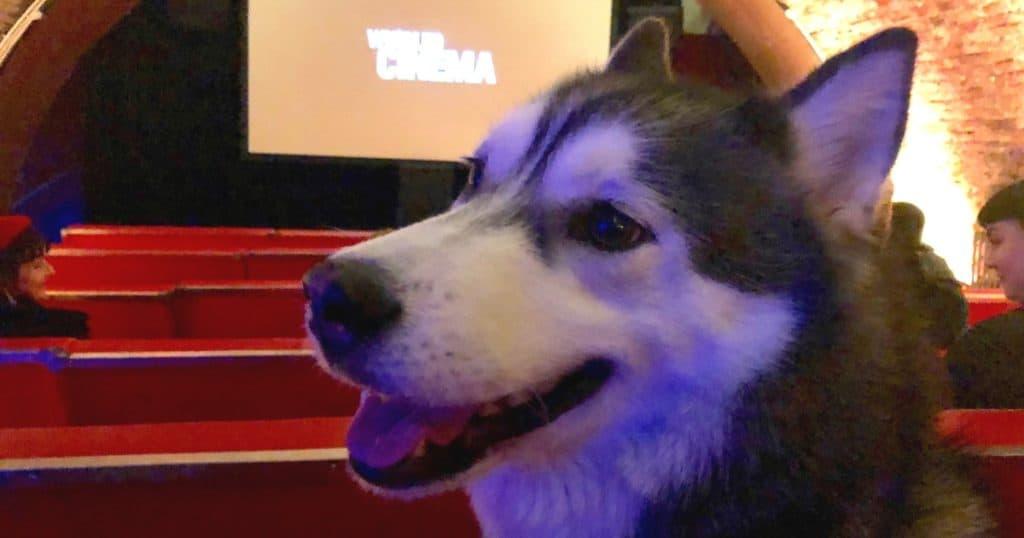 London Gets A New Dog-Friendly Cinema At Whirled Cinema Brixton