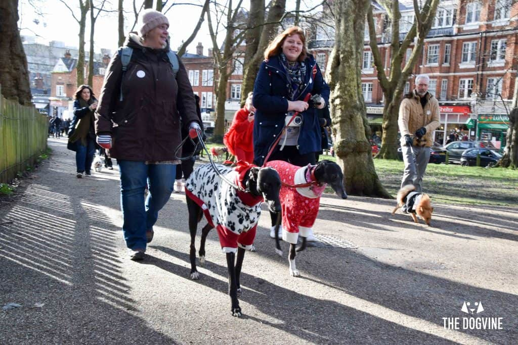 London Dogs Celebrate Valentines Day On The All Dogs Matter Valentines Walk - London Dog Event 44