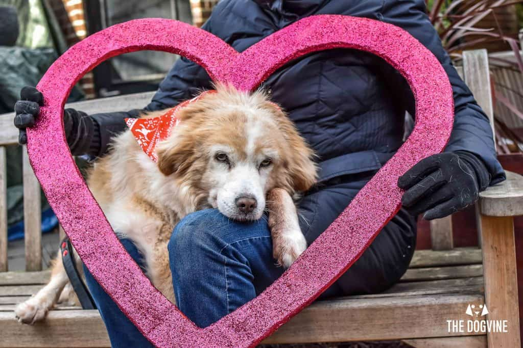 London Dogs Celebrate Valentines Day On The All Dogs Matter Valentines Walk - London Dog Event 91