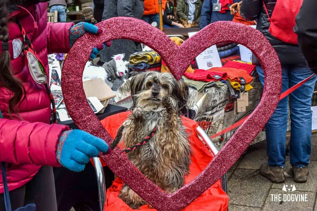London Dogs Celebrate Valentines Day On The All Dogs Matter Valentines Walk - London Dog Event 93