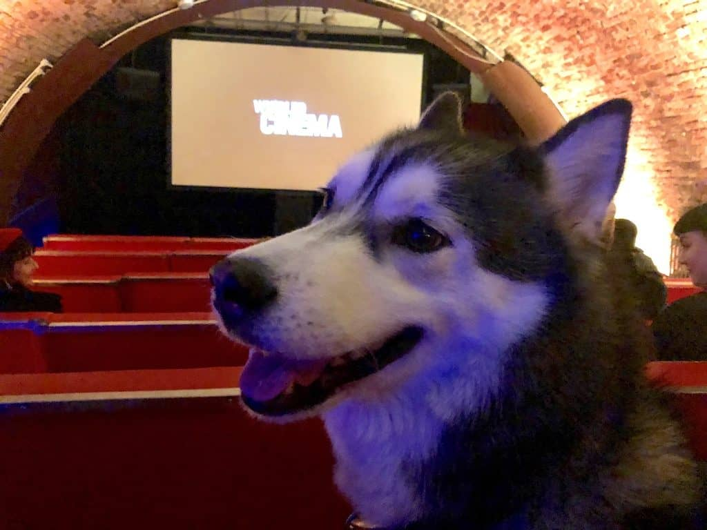 London Gets A New Dog-Friendly Cinema At Whirled Brixton 16