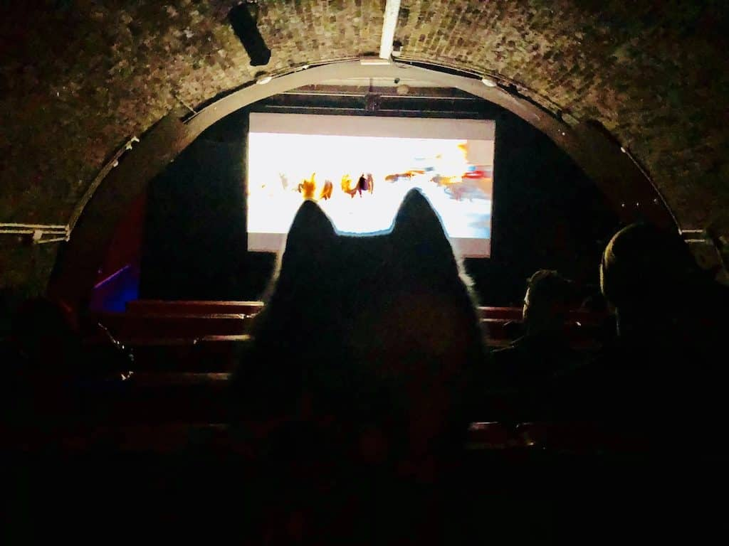 London Gets A New Dog-Friendly Cinema At Whirled Brixton 18