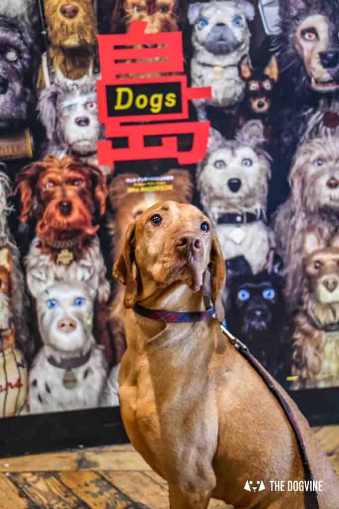 Dog-Friendly Cinema - Picturehouse Clapham - Isle of Dogs 2