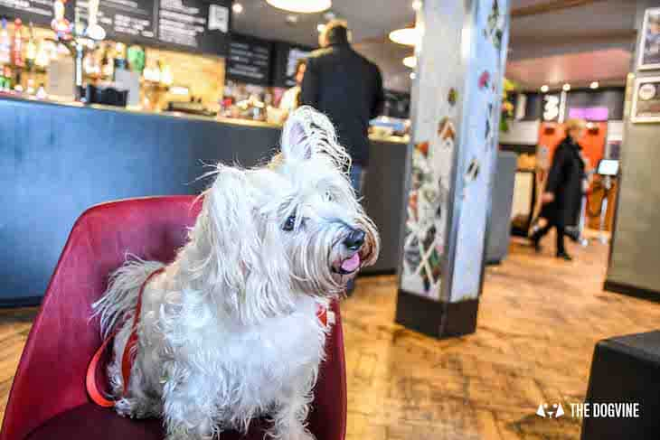 Dog-Friendly Cinema - Picturehouse Clapham - Isle of Dogs 48
