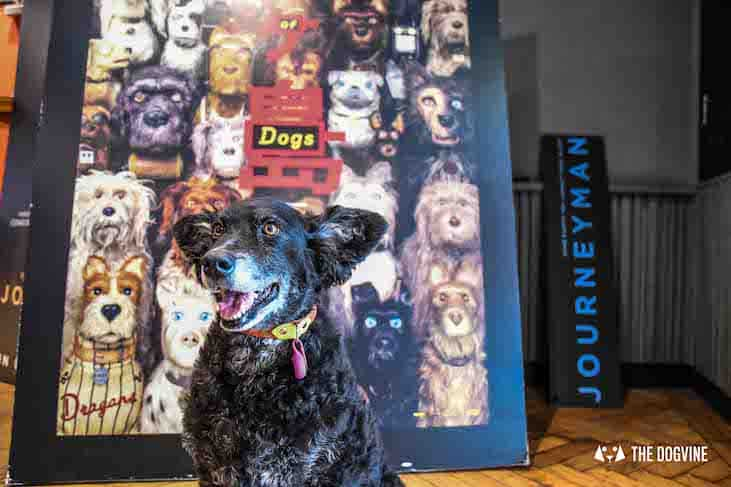 Dog-Friendly Cinema - Picturehouse Clapham - Isle of Dogs 52