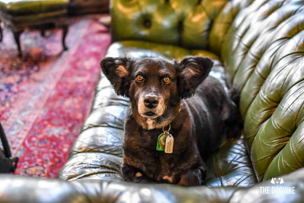 Dog-Friendly Shoreditch Mutts and Motorcycles At The Bike Shed 8
