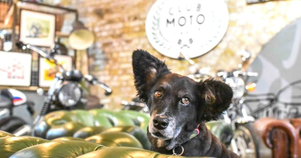 Dog-Friendly Shoreditch | Mutts and Motorcycles At The Bike Shed