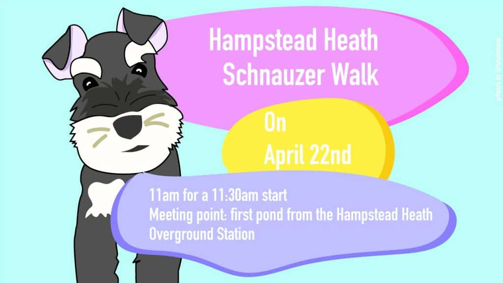 London Dog Events - Hampstead Heath Schnauzer Walk No 6