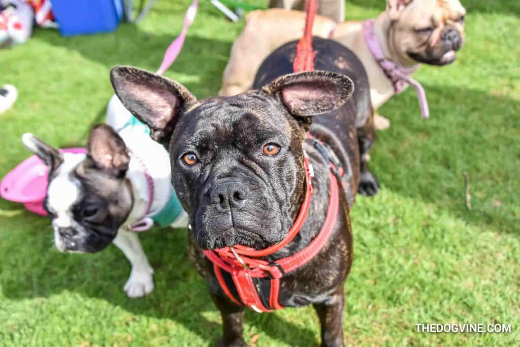 The London Dog Meetups Guide For You And Your Dog - Things to Do With Your Dog 6
