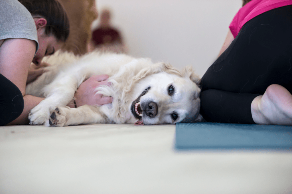 doga-yoga-with-dogs-the-sink-april-2018-2