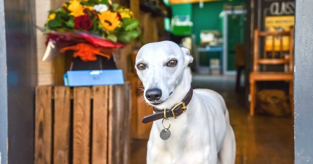 The Dogvine Guide to Dog-Friendly Waterloo and The Southbank