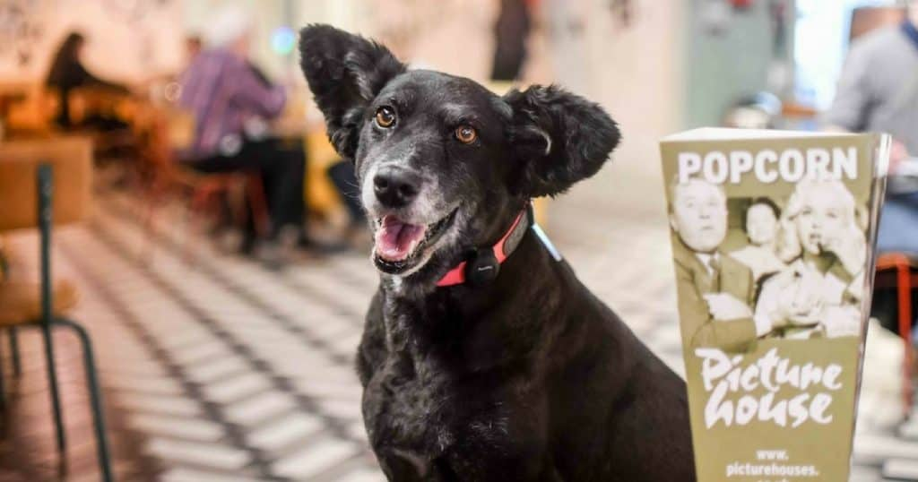 FI - London Dogs Are Loving Picturehouse Central Dog-Friendly Cinema (1)