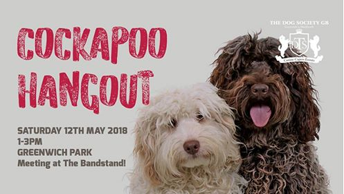 London Dog Events - Cockapoo Canine Capers Hangout