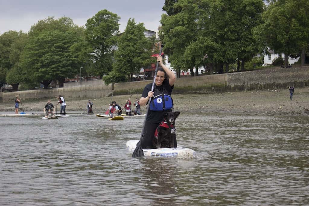 London Dog Events - Dog-and-Human-Paddle-Boarding-1