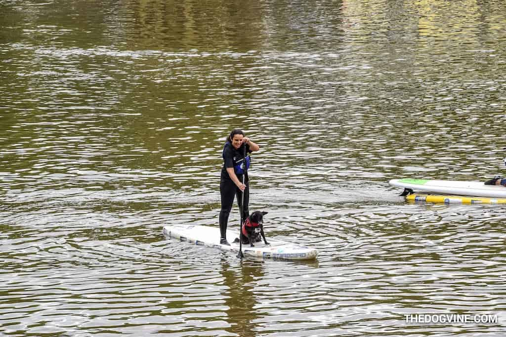 London Dog Events - Dog-and-Human-Paddle-Boarding-2