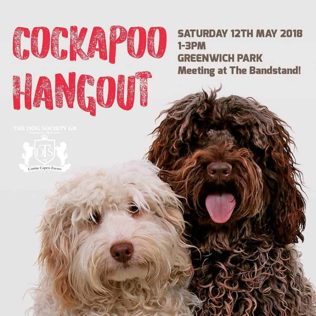 London Dog Events THE COCKAPOO CANINE CAPERS HANGOUT