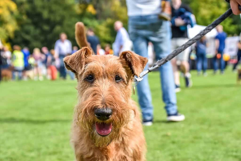 London Dog Events - Tooting Common Fun Dog Show