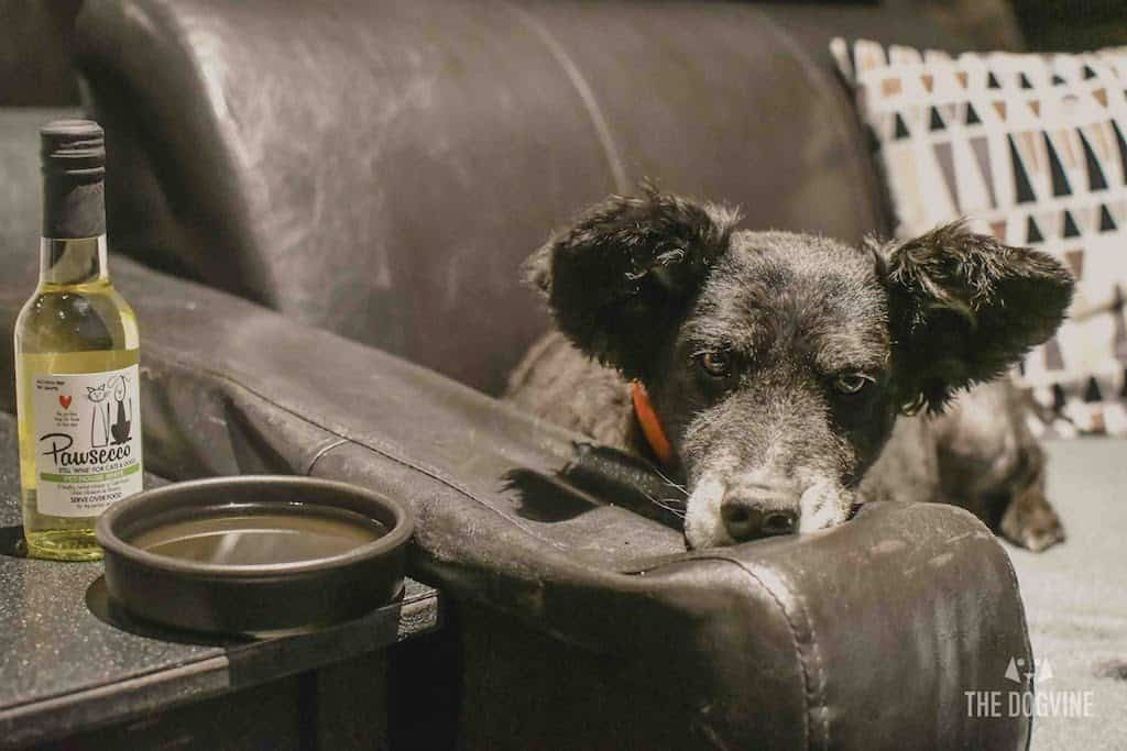 London Dog-Friendly Cinema At The Exhibit Puppy Love Brunch Review 10