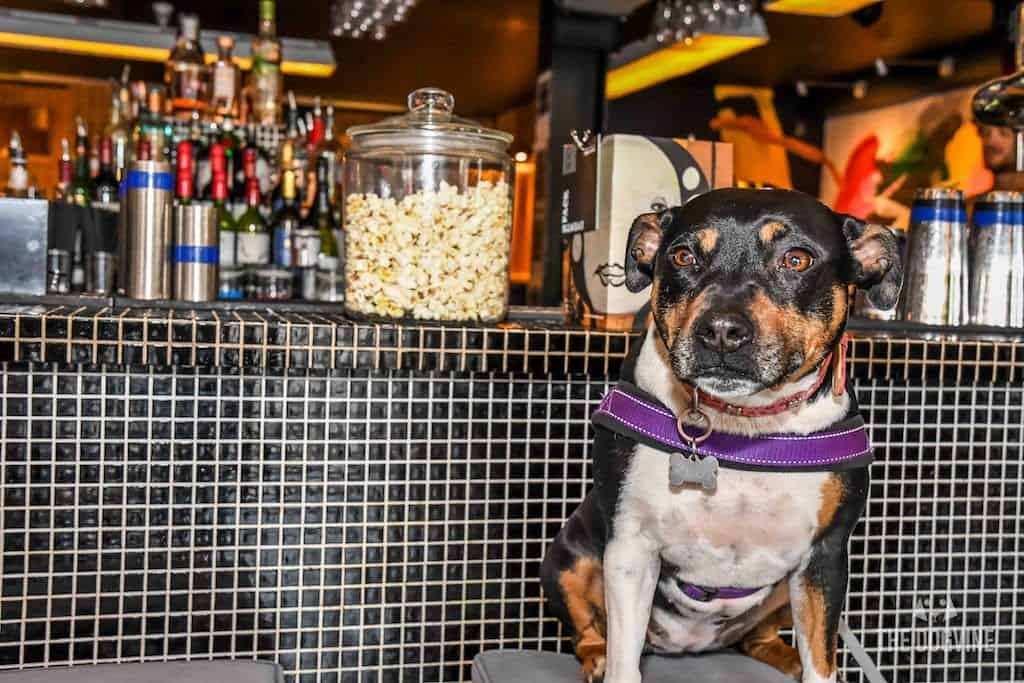 London Dog-Friendly Cinema At The Exhibit Puppy Love Brunch Review 23