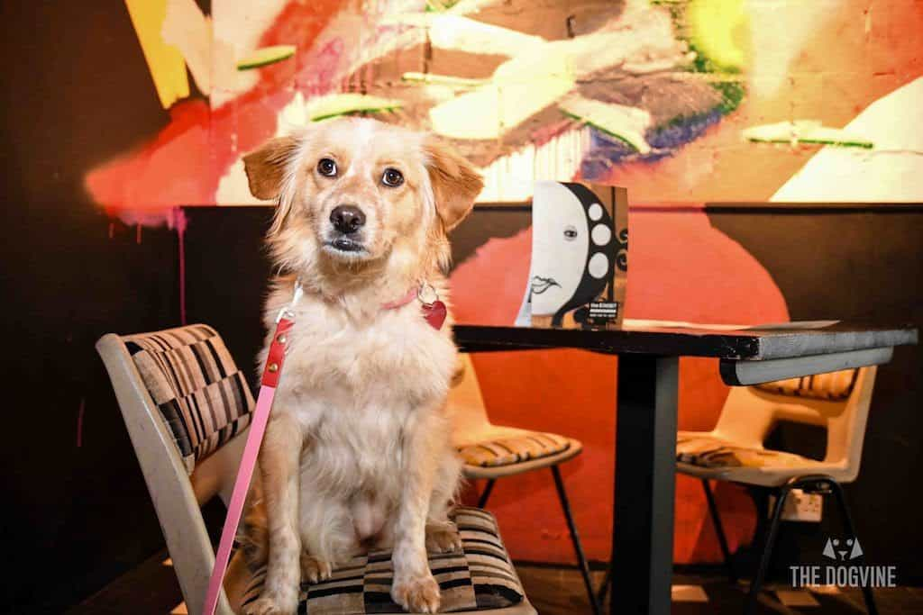 London Dog-Friendly Cinema At The Exhibit Puppy Love Brunch Review 26