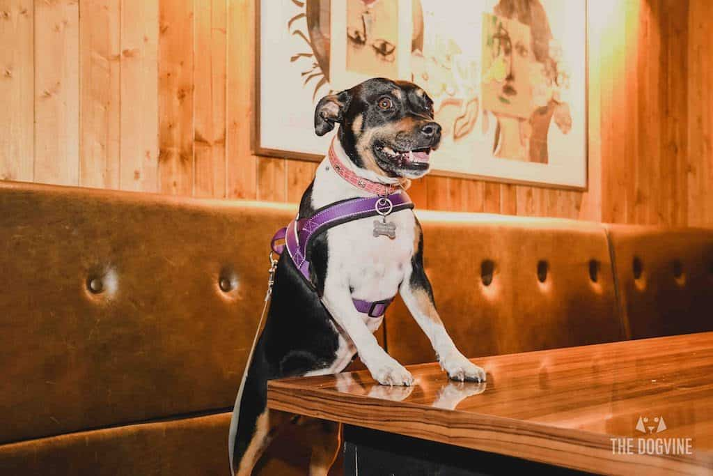 London Dog-Friendly Cinema At The Exhibit Puppy Love Brunch Review 27