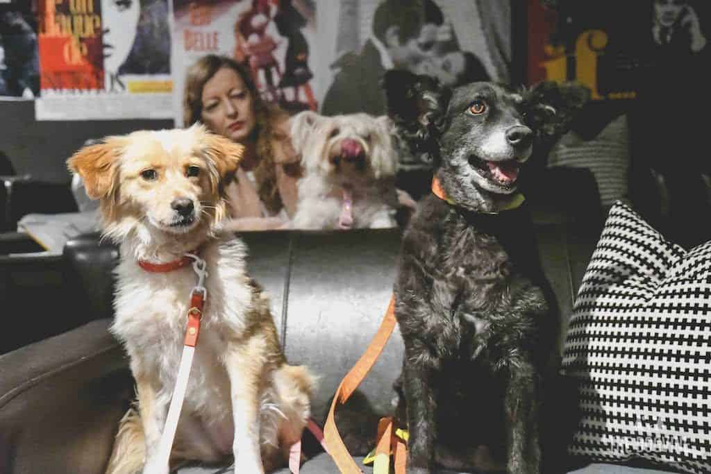 London Dog-Friendly Cinema At The Exhibit Puppy Love Brunch Review 31