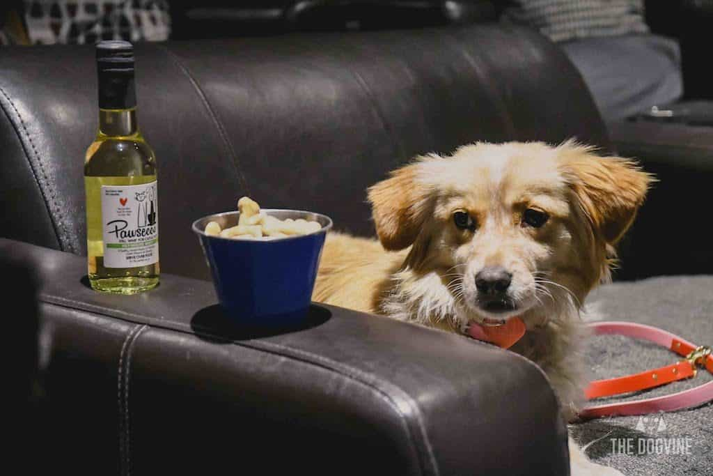 London Dog-Friendly Cinema At The Exhibit Puppy Love Brunch Review 34