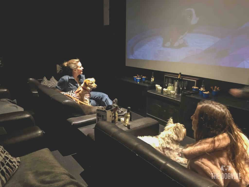 London Dog-Friendly Cinema At The Exhibit Puppy Love Brunch Review 35