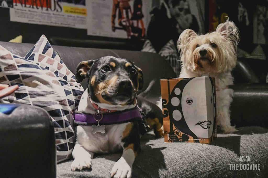 London Dog-Friendly Cinema At The Exhibit Puppy Love Brunch Review 6