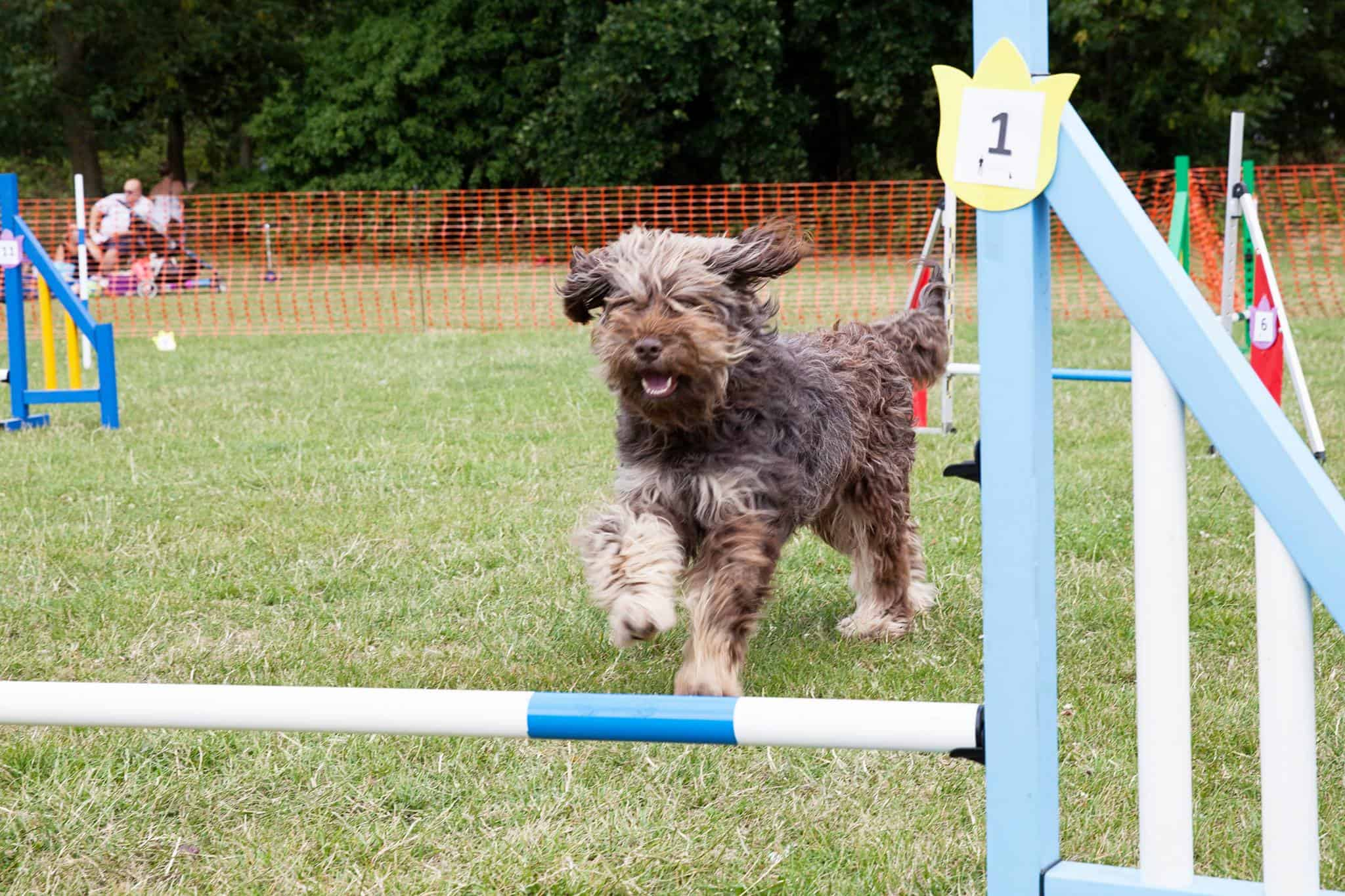 London Dog Show - Mavens Vet Dog Show | Morden Family Fun Day - London Dog Events