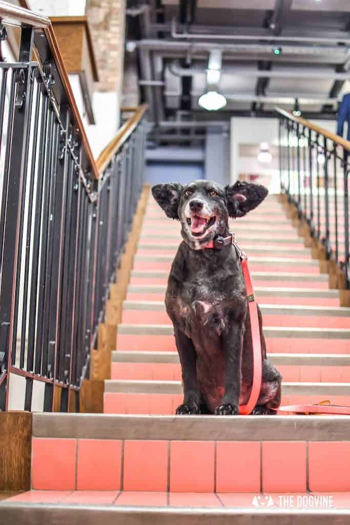 Picturehouse Central Dog-Friendly Cinema Isle of Dogs 16
