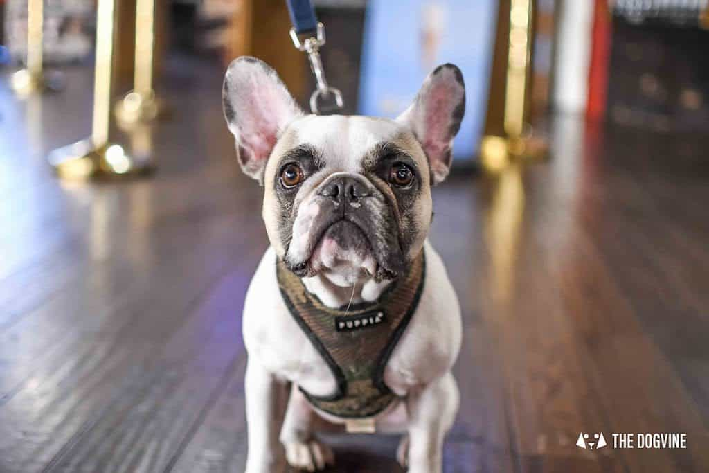 Picturehouse Central Dog-Friendly Cinema Isle of Dogs 42