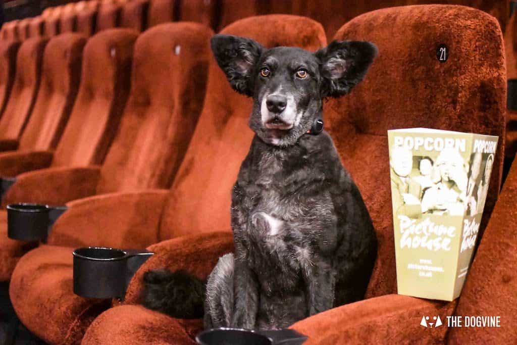 Picturehouse Central Dog-Friendly Cinema Isle of Dogs 51