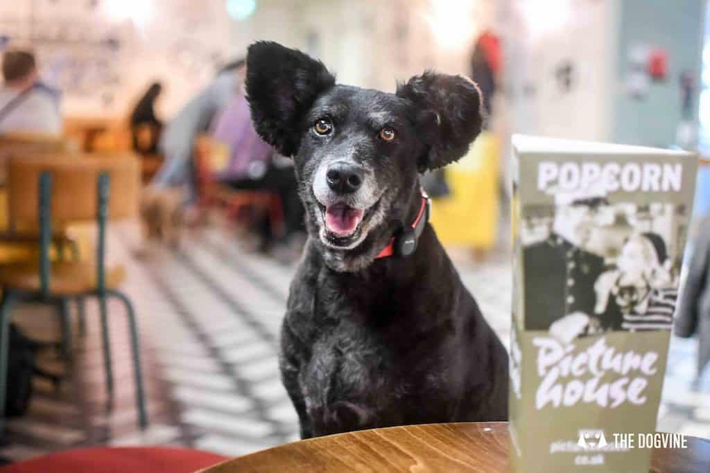 Picturehouse Dog-Friendly Cinema Isle of Dogs 79