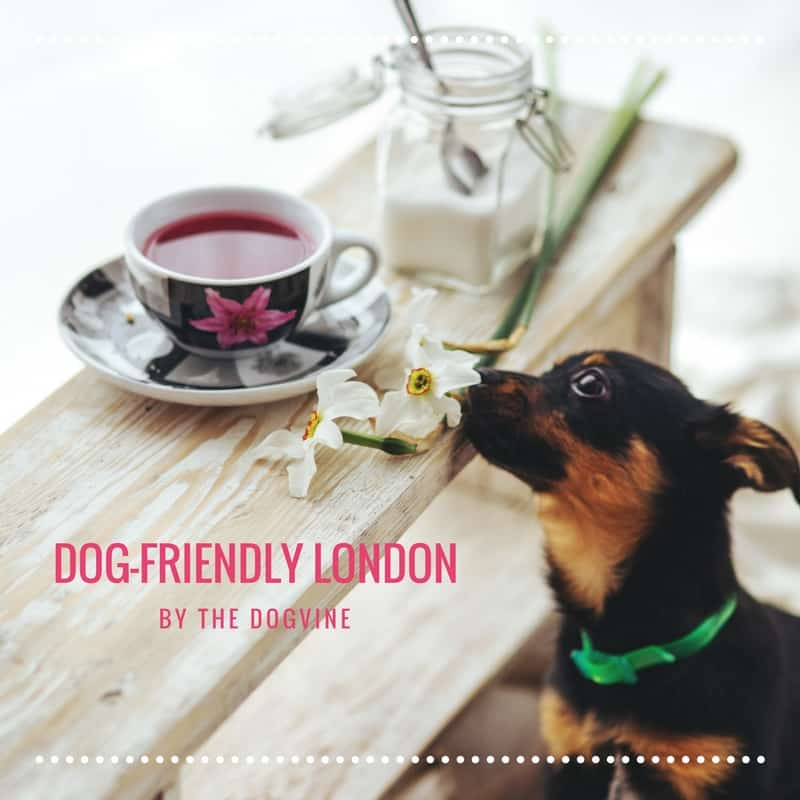 THE DOGVINE DOG-FRIENDLY LONDON