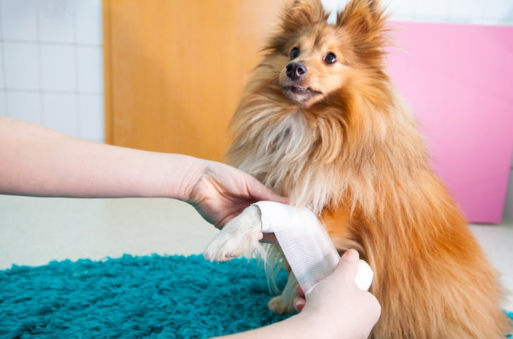 Where To Do A Dog First Aid Course In London - Main