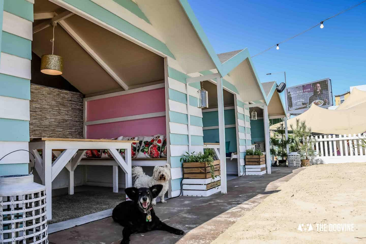 Dog-Friendly Neverland Beach Club - All You Need To Know 1