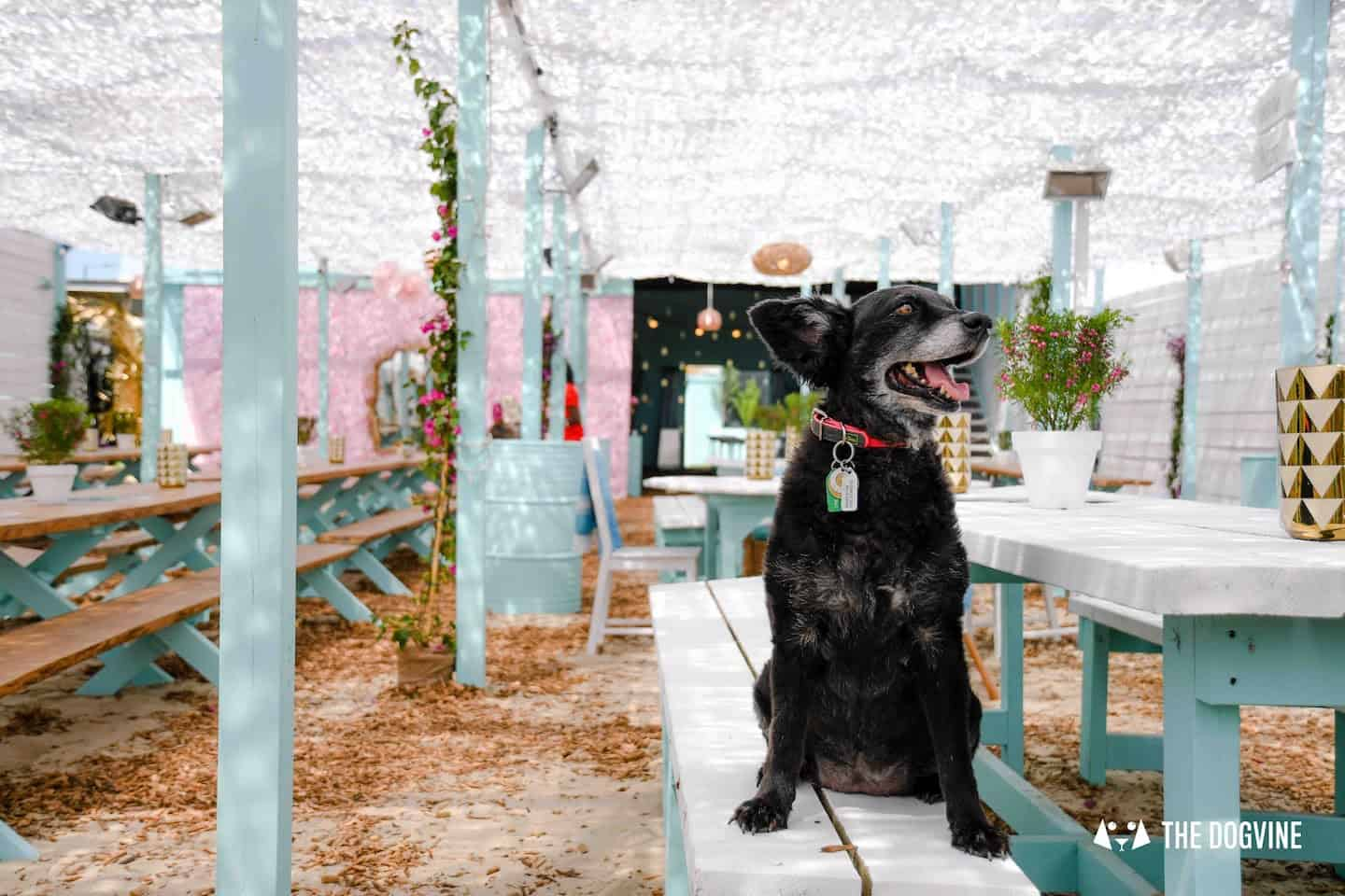 Dog-Friendly Neverland Beach Club - All You Need To Know 10