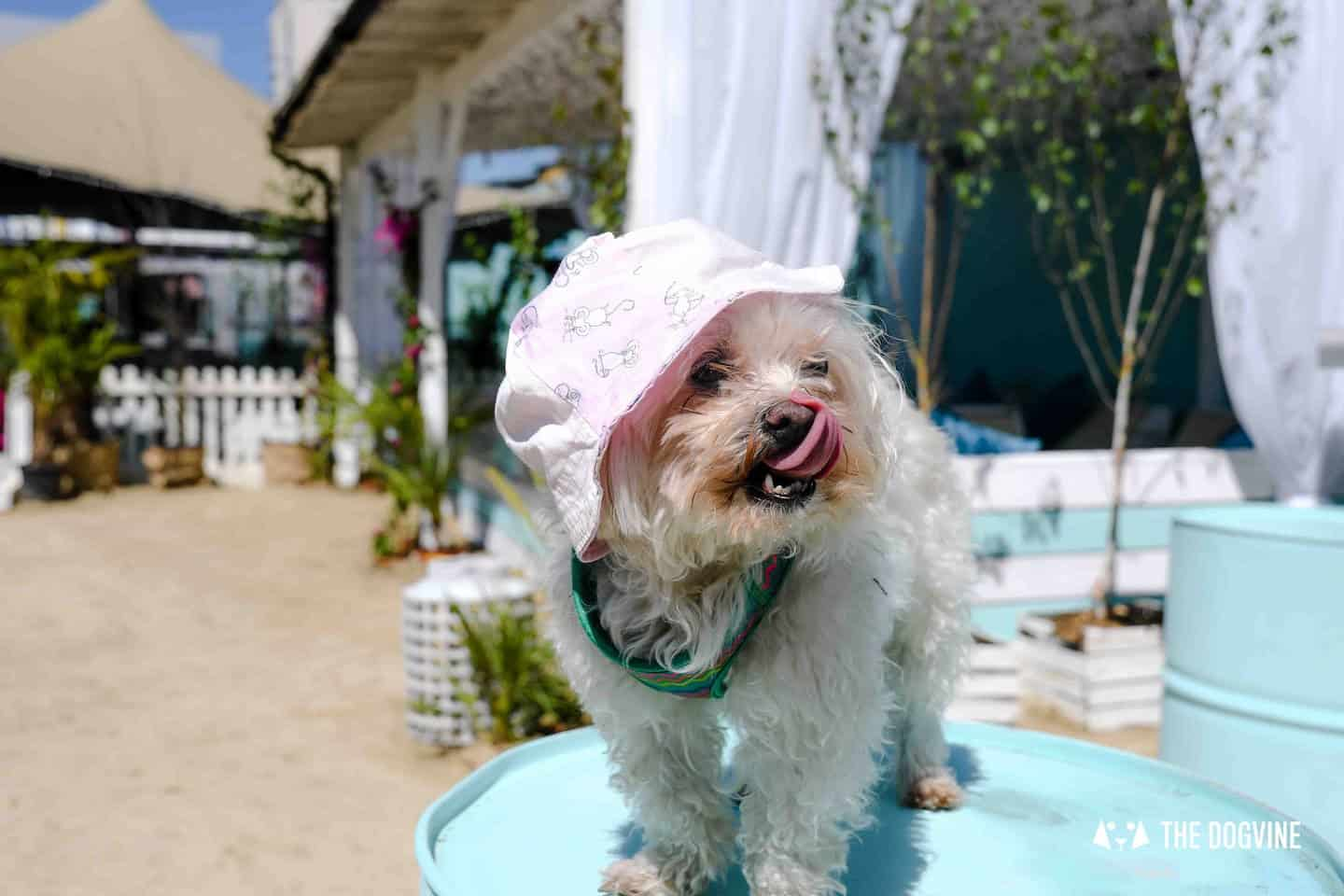 Dog-Friendly Neverland Beach Club - All You Need To Know 19