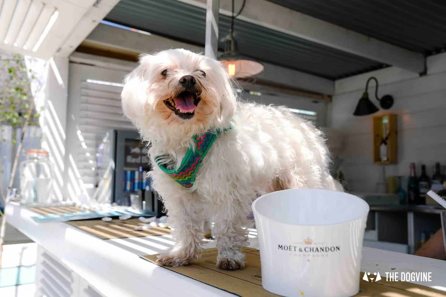 Dog-Friendly Neverland Beach Club - All You Need To Know 22