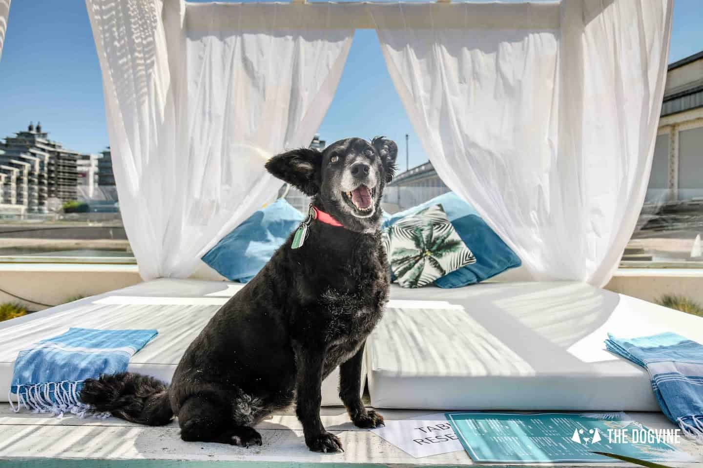 Dog-Friendly Neverland Beach Club - All You Need To Know 24