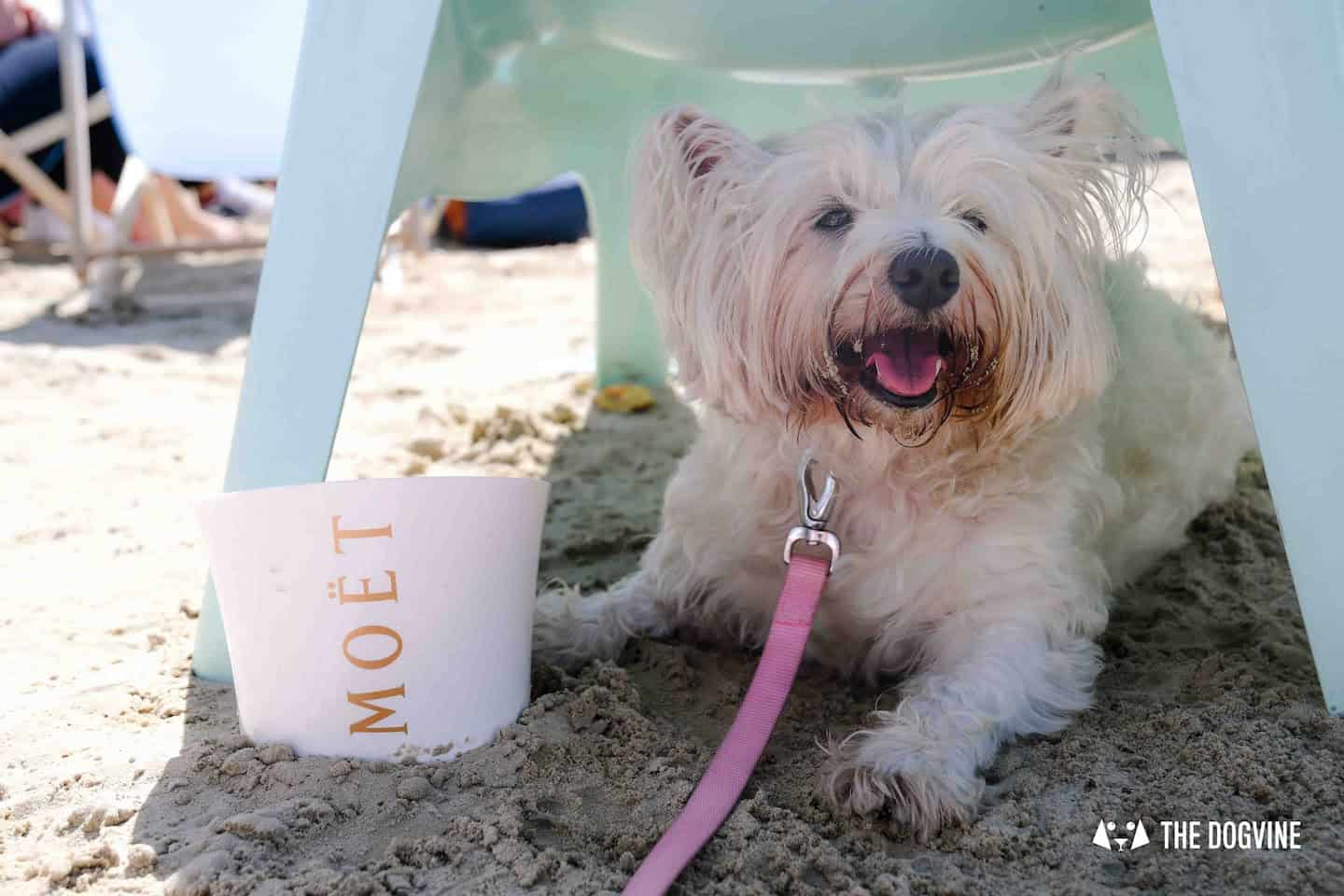 Dog-Friendly Neverland Beach Club - All You Need To Know 28