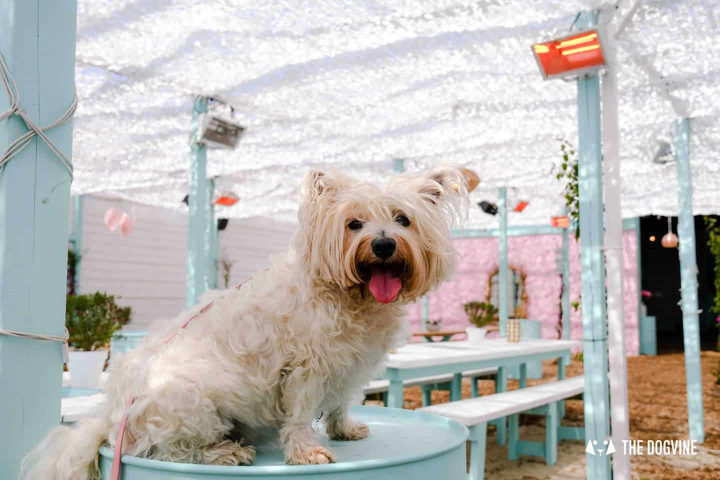 Dog-Friendly Neverland Beach Club - All You Need To Know 3