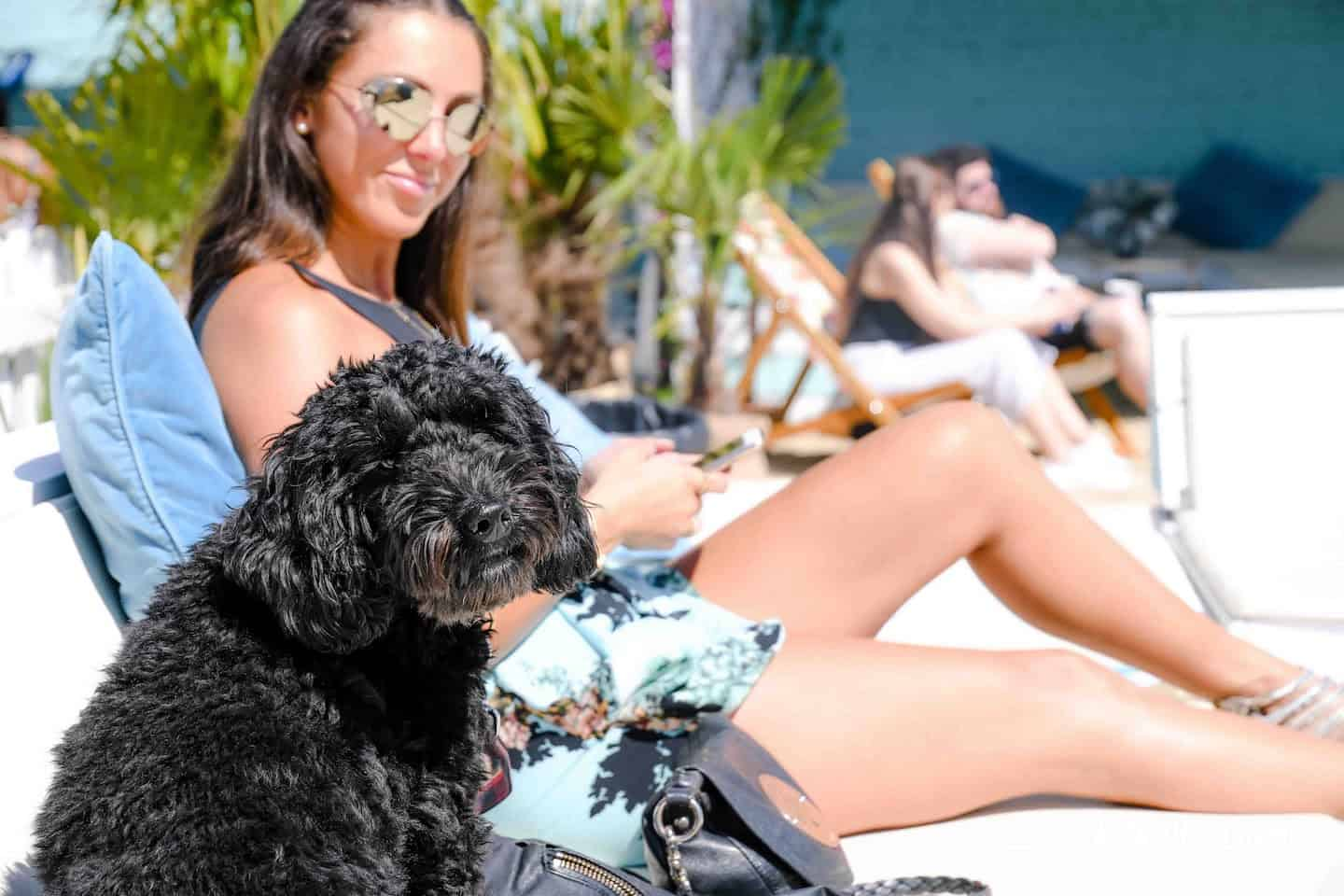 Dog-Friendly Neverland Beach Club - All You Need To Know 32